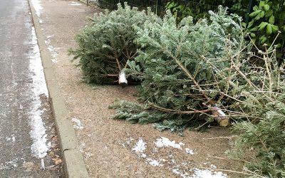 CHRISTMAS TREE PICK UP IS UNDERWAY.  Ends Fri., 1/22/2021