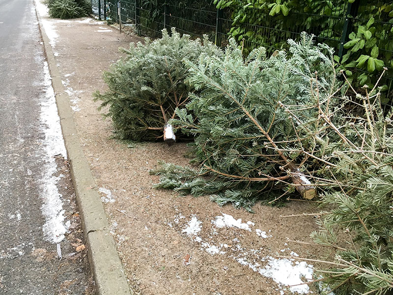 CHRISTMAS TREE PICK UP IS UNDERWAY.  Ends Fri., 1/22/2021
