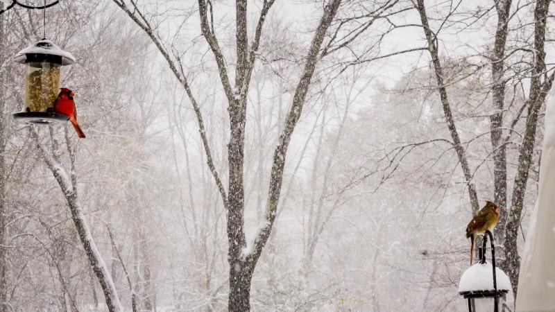 TOWN NEWSLETTER – Winter 2021